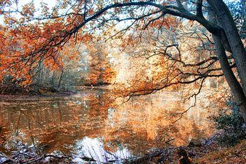 Herfst von Wilma van der Togt