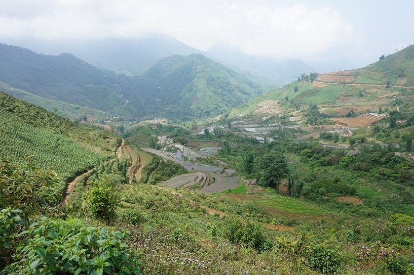 De rijstvelden in Sapa Vietnam van Lindy van Oirschot