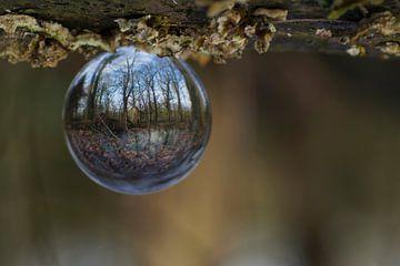 The world upside down. von Birgitte Bergman