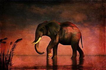 Dierenrijk – Olifant loopt alleen door het water van Jan Keteleer