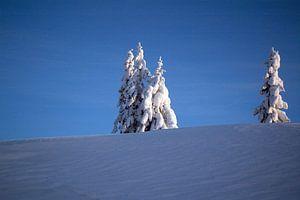 Een winterlandschap in de blauwe koude lucht van