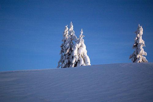 Een winterlandschap in de blauwe koude lucht