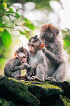 Bali Affe Familie von Tijmen Hobbel