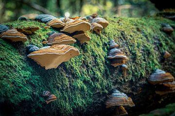 Pilze auf einem Baumstumpf von Jayzon Photo