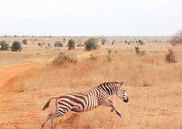 Zebra springt weg van Cinthia Mulders