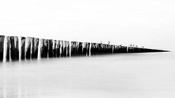 Noordzee - Breakwater met Meeuwen van Carina Buchspies