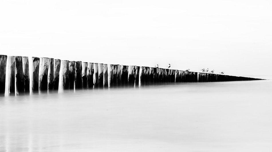 Noordzee - Breakwater met Meeuwen