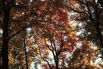 Herfstbomen van Jessica van den Heuvel