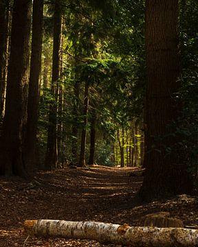 Een mooi bos een beetje duister. Een stukje natuur aan de muur! van GiPanini