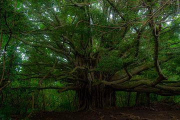 De oude boom von Sylvia de Strandjutter