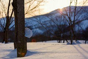 Zonsondergang winters  Niseko, Japan