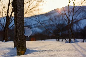 Le coucher de soleil hiverne à Niseko, au Japon sur