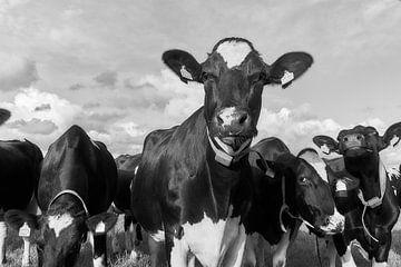 Kühe auf der Wiese von Ad Jekel