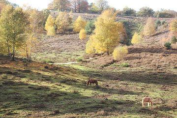 Herfst op de Posbank
