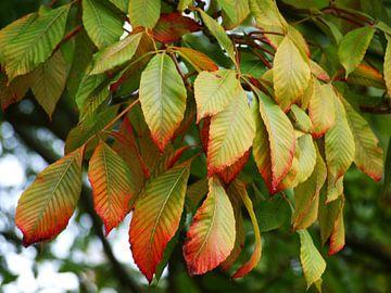 Herfstbladeren van Rinke Velds