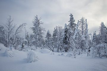 Snowy landscape van Renate Winder
