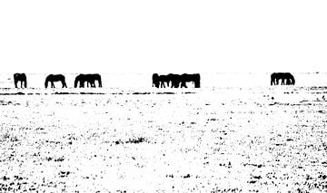 paarden in zwart-wit van