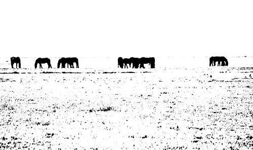paarden in zwart-wit