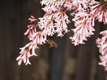 Sommerbiene von Eline Melis
