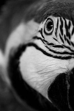 Blauwgele ara von Samantha Dekker