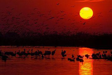 Lever du soleil au-dessus du lac Csaj, en Hongrie. sur AGAMI Photo Agency