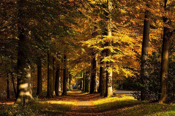 Fietspad door een herfstachtige omgeving van Bram van Broekhoven