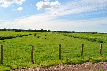Hollands veld met schapen van Charlotte van Noort