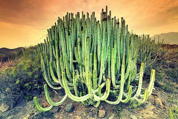 Cactus von Arnaud Bertrande