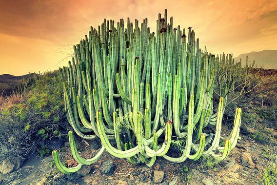 Cactus van Arnaud Bertrande