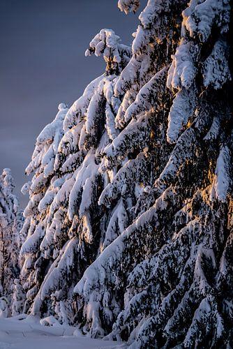 Winterwald zur goldenen Stunde