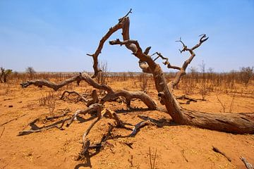 Paysage désertique au Botswana sur Jolene van den Berg