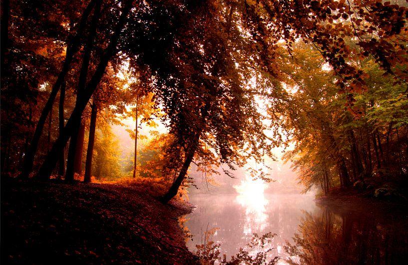 the red forest van bob van den berg
