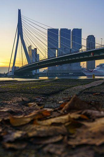 Erasmusbrug in Rotterdam in de herfst