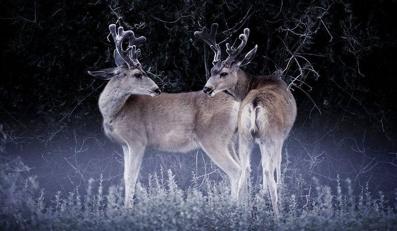 0775 Two deer van Adrien Hendrickx