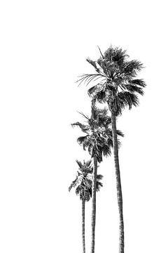 Minimalistische Palmenidylle von Melanie Viola