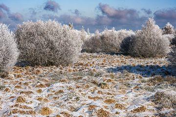 Winter in de Hoge Venen van Heinz Grates