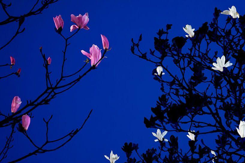 Magnolia bij maanlicht van Raoul Suermondt