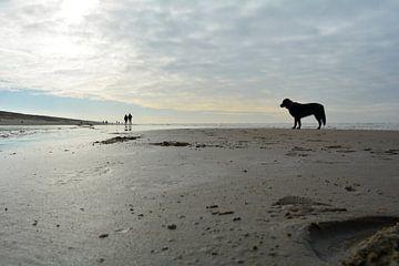Hond op het strand  van Sigune italiaanser
