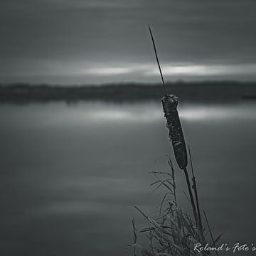innige deelneming @ t Roegwold van Roland's Foto's