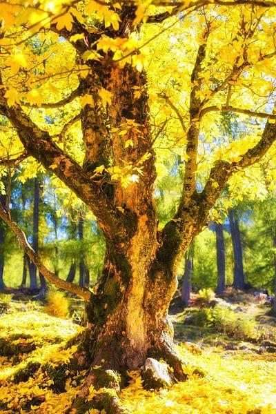 De Sprookjesboom van Coen Weesjes