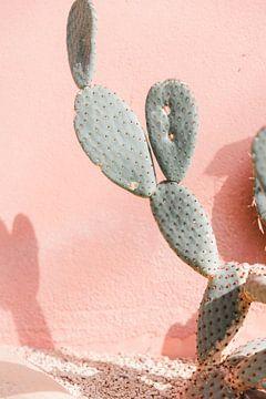 Cactus tegen roze muur - reisfotografie van Robin Polderman