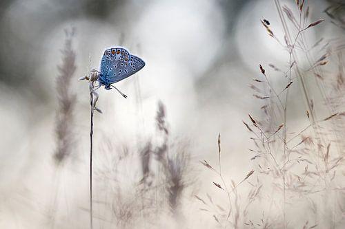 Slapen tussen grassen van Teuni's Dreams of Reality
