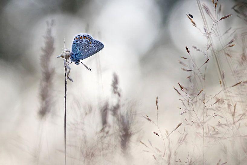 Slapen tussen grassen sur Teuni's Dreams of Reality