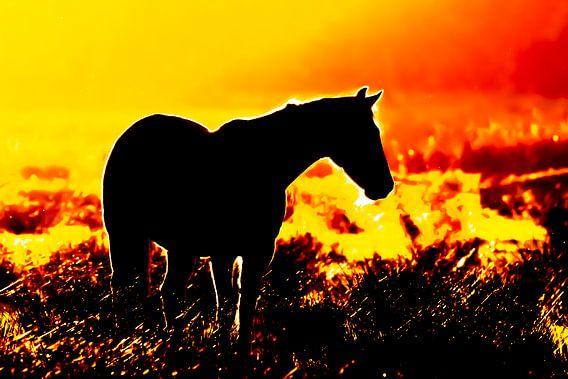 Silhouet van een paard in tegenlicht tijdens zonsondergang