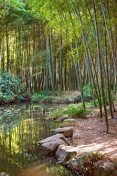 Forêt de bambous chinoise 1 sur Anouschka Hendriks
