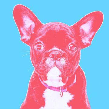 süße Französische Bulldogge lustiger Hund Humor von Felix Brönnimann