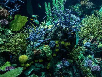 koraal en vissen in Oceanium : Diergaarde Blijdorp van Loek Lobel