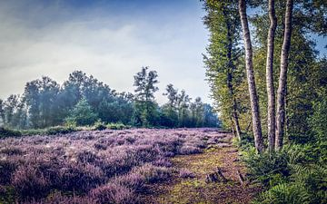 Heidelandschaft mit drei Birken
