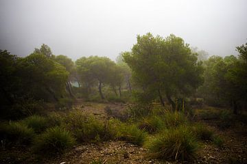 Het bos in Andalucia van Natacha Persyn
