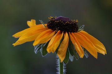 fleur jaune sur Augenblicke im Bild